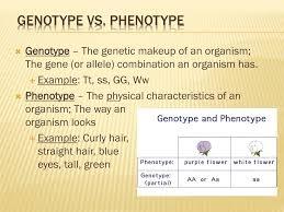 ppt fundamentals of genetics