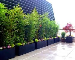 bamboo garden design ideas