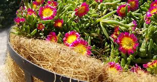 using coconut coir products in the