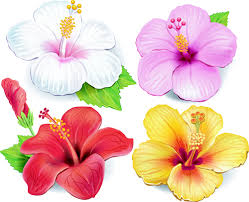 beautiful flowers vector 04 free