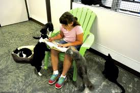 Feline Fun Kids Read To Cats During Library S Summer Program Salisbury Post Salisbury Post