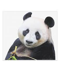 Fanwraps Pet Panda Passenger Window Graphic Best Price And Reviews Zulily