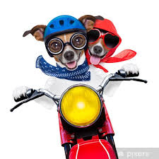 Motorbike Couple Of Dogs Wall Mural Pixers We Live To Change