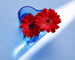خلفيات زهور رائعة 6 إسلاميات