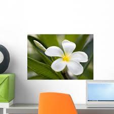 Tropical Flowers Frangipani Plumeria Wall Decal By Wallmonkeys Peel And Stick Graphic 18 In W X 12 In H Wm8949 Walmart Com Walmart Com