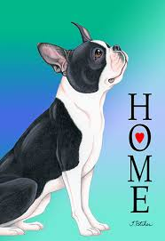 boston terrier tomoyo pitcher home