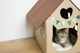 designs captivants de maison de chat en