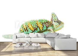Veiled Chameleon Wall Mural Wallpaper Murals Wallsheaven Nathan 0834