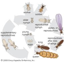 27+ Do All Termites Fly Gif