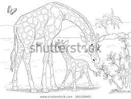 De Dierentuin Dieren Van Afrika Giraffen Stockillustratie 365258465