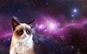 grumpy cat wallpapers wp4344883