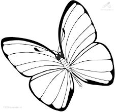 Kleurplaat Dieren Vlinder Kleurplaat Vlinder Groot