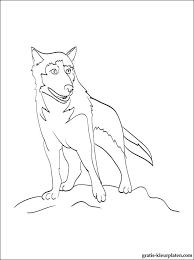 Kleurplaat Alaskan Husky Gratis Kleurplaten