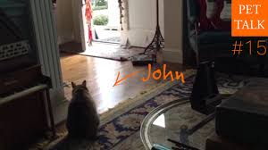 Episode 15 John The Sneaky Cat With Invisible Fence And The Dangers Of Chocolate Youtube