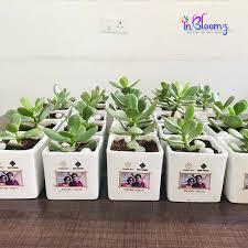 inbloomz indoor plants in
