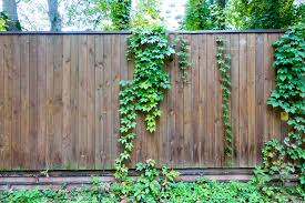 The Pros And Cons Of Fence Friendly Vines