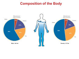 Image result for human body composition