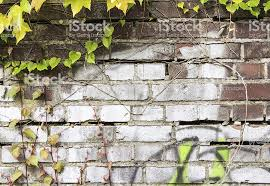 Ivy Stone Wall Background Stock Photo - Download Image Now - iStock