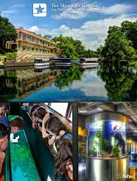 glass bottom boat tour at the meadows
