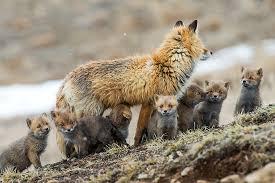 fox family gathering photo