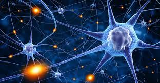 Resultado de imagen de En el cerebro neuronas son sin fin
