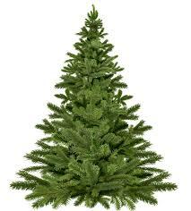 Free stock photo of christmas, christmas decoration, christmas tree