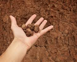 how to improve clay soil harvest to table