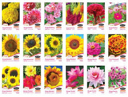 jc garden seed flower seeds jc