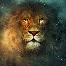 خلفيات اسود ونمور
