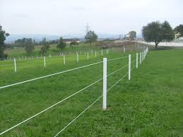 Equisafe Uk Horse Electric Fencing Horse Paddocks Fencing Electric Fencing For Horses Electric Fence Horse Fencing
