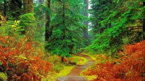 fall forest wallpaper 74 pictures