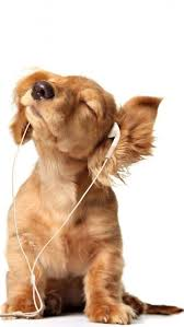 intoxicated listen to cute puppy