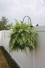 This Listing Is For A Handmade Wrought Iron Shepherds Hook The Ideal Accessory For Your Vinyl Rail Hanging Plants Outdoor Hanging Plants On Fence Fence Plants