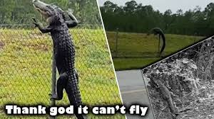 Thank God It Can T Fly Stunned After Video Shows Alligator Climbing Fence Crazy And Scary Youtube