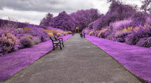 belfast botanic gardens in northern