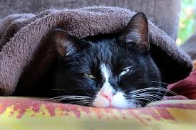 colds in cats cat tales