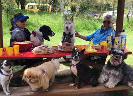 Con Fiestas Se Premia El Carino Que Dan Las Mascotas
