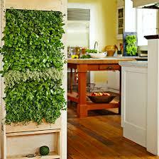 grow a vertical herb garden in the kitchen