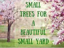 39 small trees under 30 feet for a
