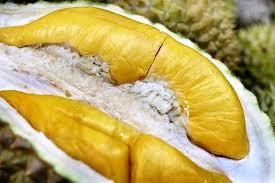 D197 Musang King – Durian Power