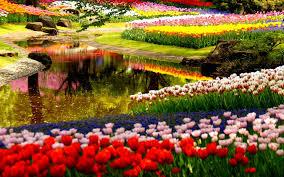 beautiful flower garden hd wallpaper