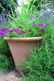 low maintenance garden pots