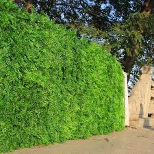 Outdoor Artificial Boxwood Ivy Hedge Privacy Fence Wall 60cmx40cm Uv Proof Grass Mats Plastic Plants For Garden Decoration Artificial Lawn Aliexpress