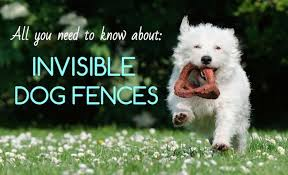 7 Best Invisible Dog Fences In Ground Vs Wireless Vs Physical Fence