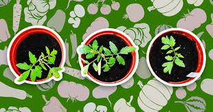 10 foods you can grow in your house or