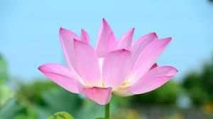 صور ورد جديد روائح الورد الجميلة رمزيات