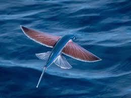 أروع صور عن البحر 2020 Hd أجمل وأحلى خلفيات ورمزيات جميلة عن البحر