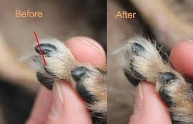 how to cut the dog s nails thepinkmouth