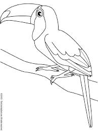 Kleurplaat Vogels Dieren Kleurplaten Vogels Tekenen