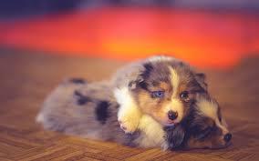 hd wallpaper cute dogs
